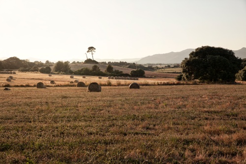 Landschaft auf Mallorca am 25.05.15. Foto: Tanja Demarmels.